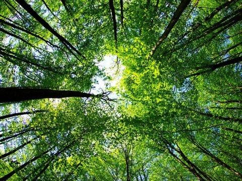 alberi dal basso
