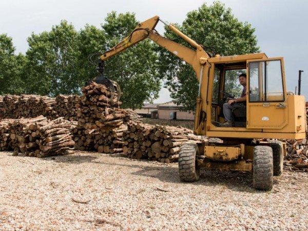 vendita ceppi di legna