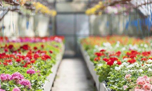 un corridoio in una serra con fiori colorati su entrambi i lati