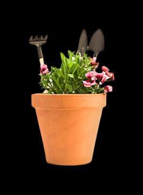 una pianta con dei fiori bianchi e rossi e dietro un piccolo rastrello e due palette