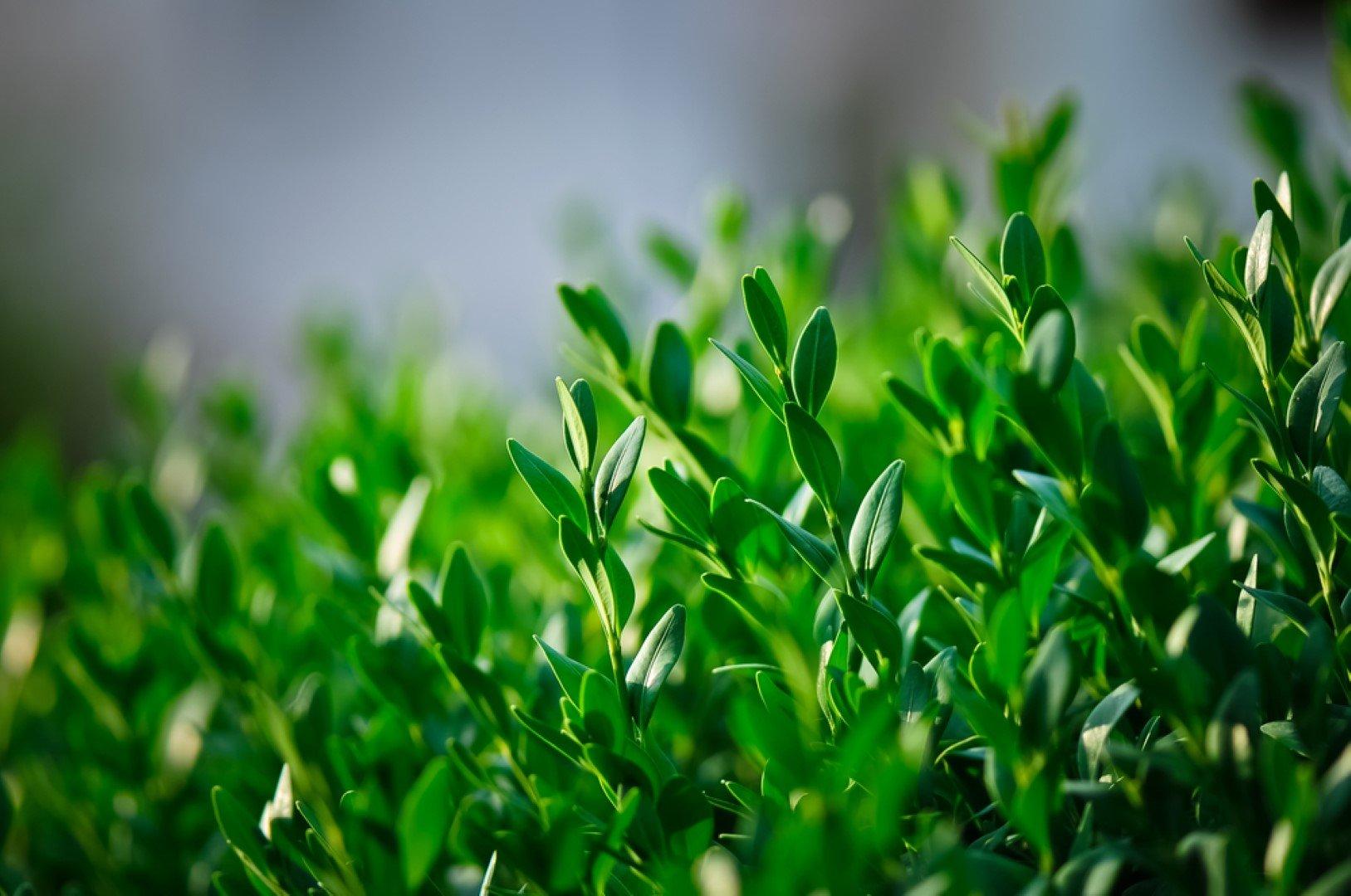 foglie di una pianta