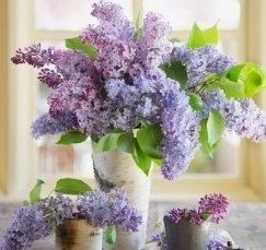 vaso fiori lilla