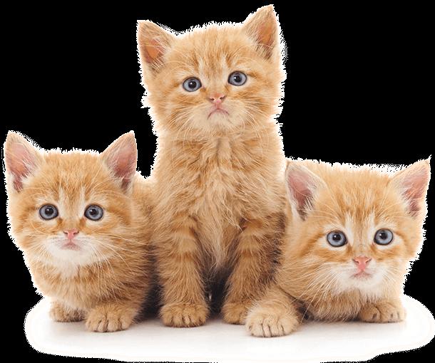 dei gatti