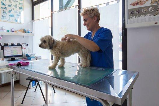 Chirurgia veterinaria vergato bo clinica valle del reno - Clinica veterinaria silla ...