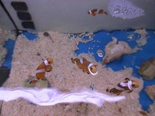 acquari e colori