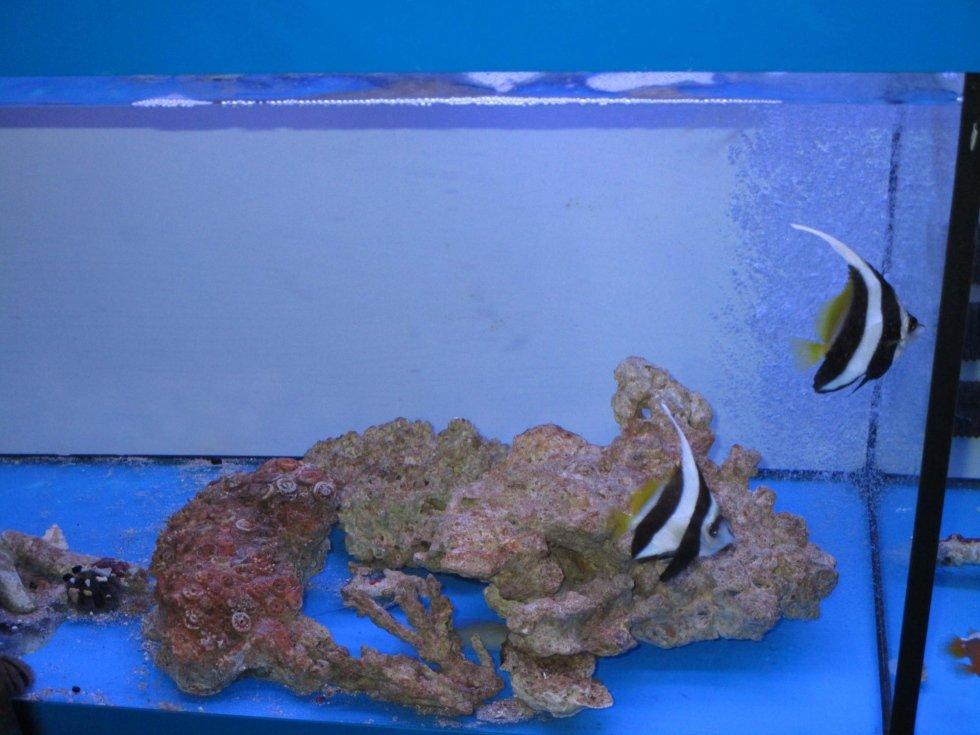 pesci marini
