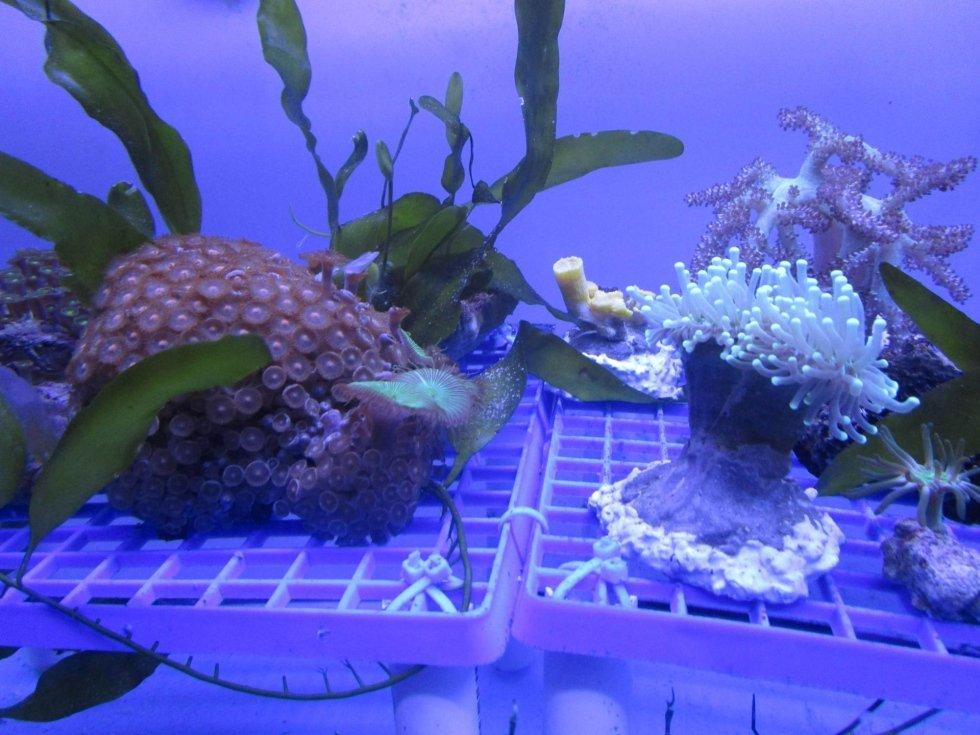 rocce e invertebrati marini