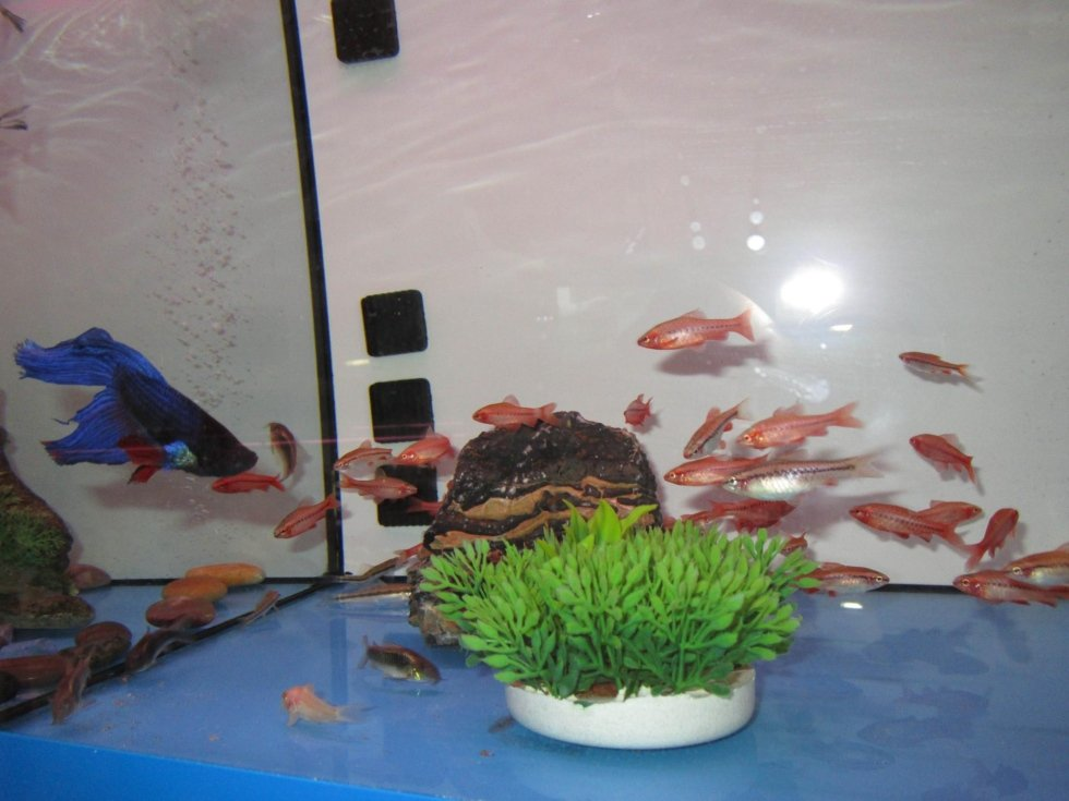 pesci acqua dolce