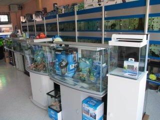 negozio