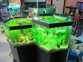acquari