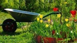 accessori giardino, giori per giardino, tulipani