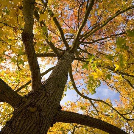 Tree surgery image