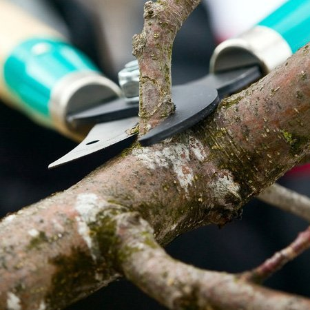 Tree pruning image