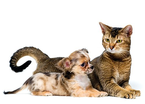 view of a cat and puppy