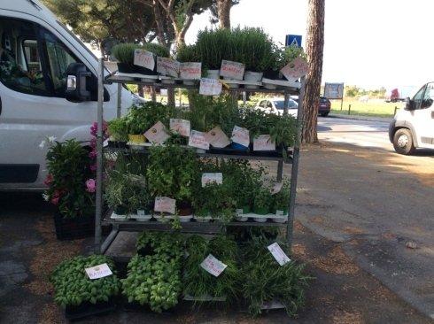 piante aromatiche, piante e fiori, mercati