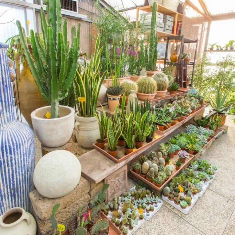 giardino cactus