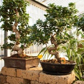 Terriccio piante bonsai