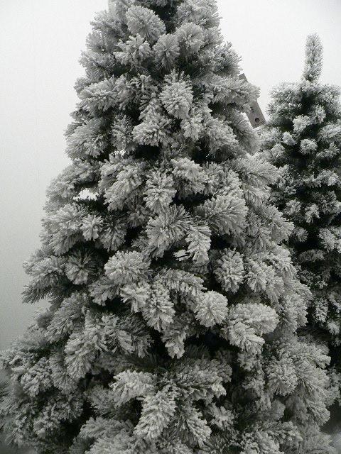 Alberi ecologici di Natale