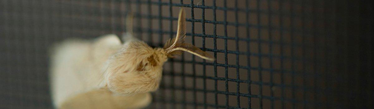 moth on flyscreen