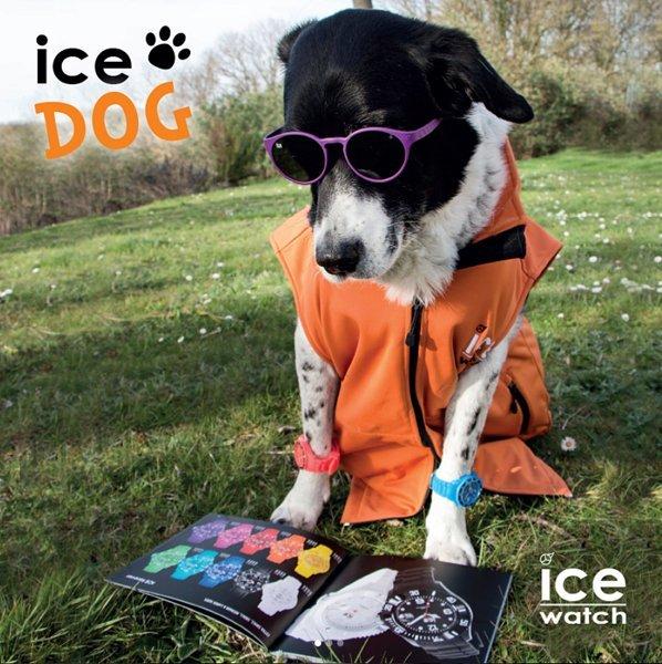 cane che consulta un catalogo di orologi