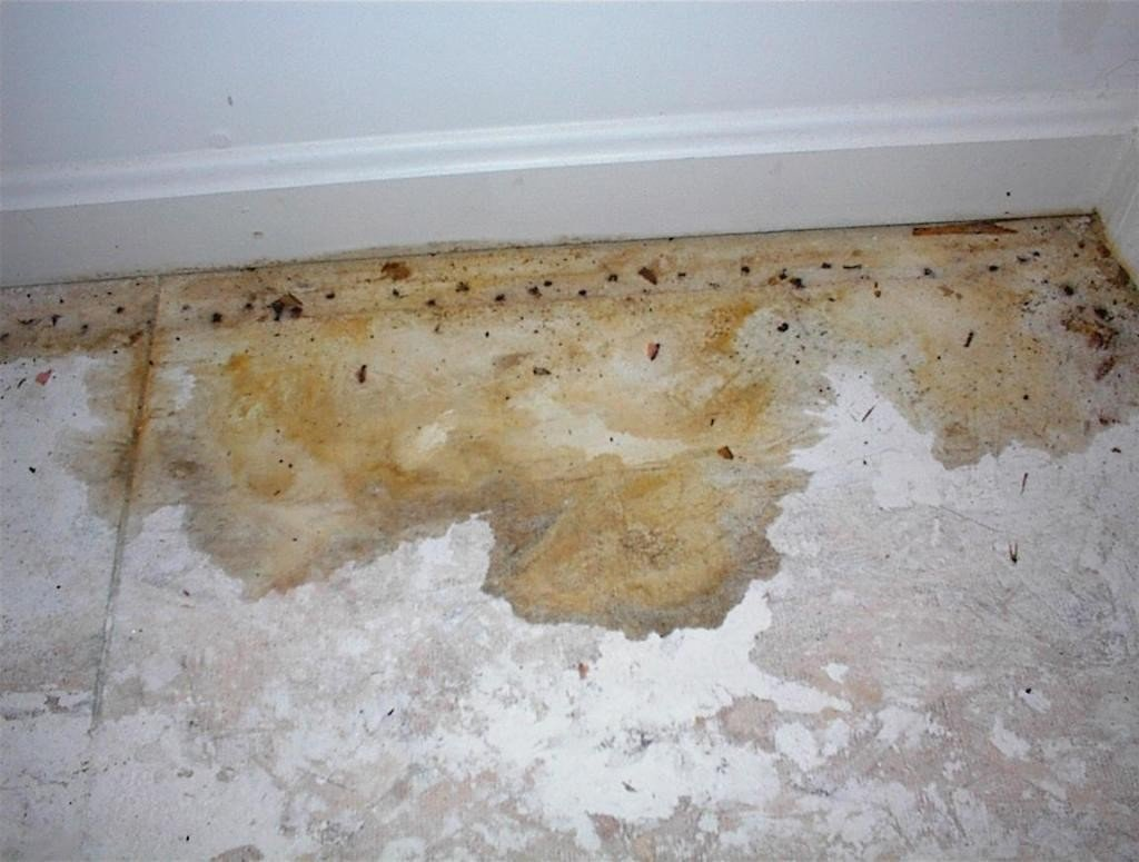eliminate cat urine smell on concrete completely