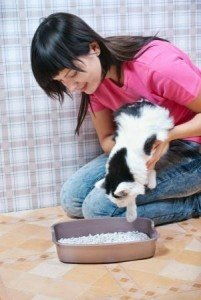 When your cat misses the litter box, you can remove cat urine smells from hardwood