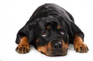 get rid of pet odor