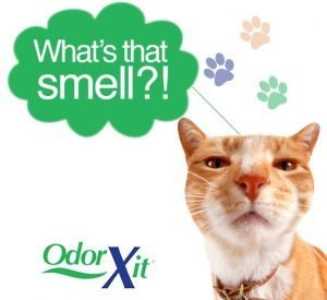Best odor eliminator for cats and pets