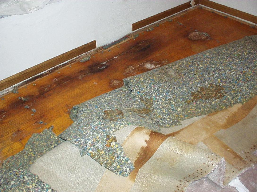 Preferred Case Study Almost New Carpet | OdorXit BQ62