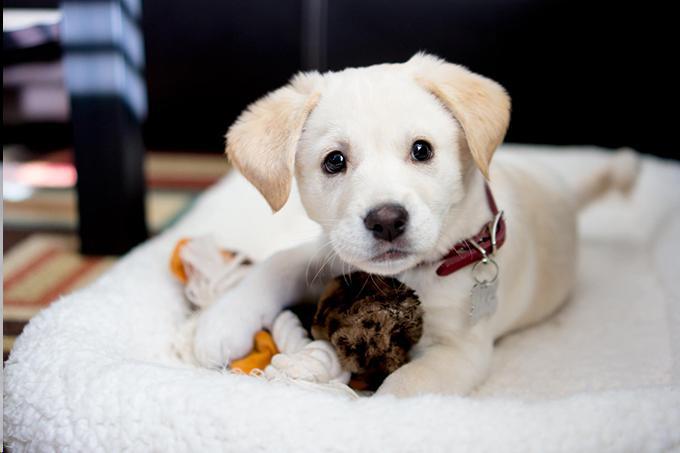 Five Startling Secrets To Remove Dog Urine From Carpet Forever
