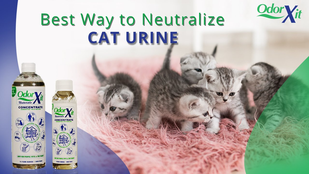 How To Remove Cat Urine Smell Permanently