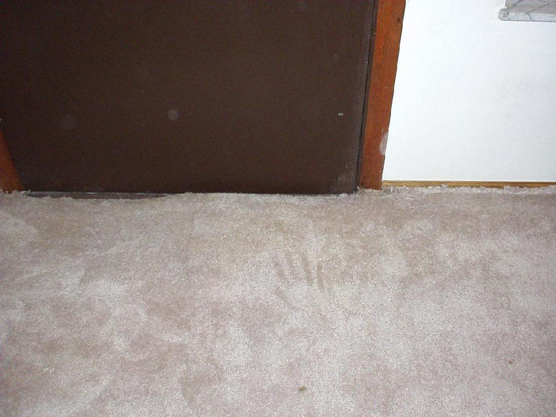 carpet case study 2