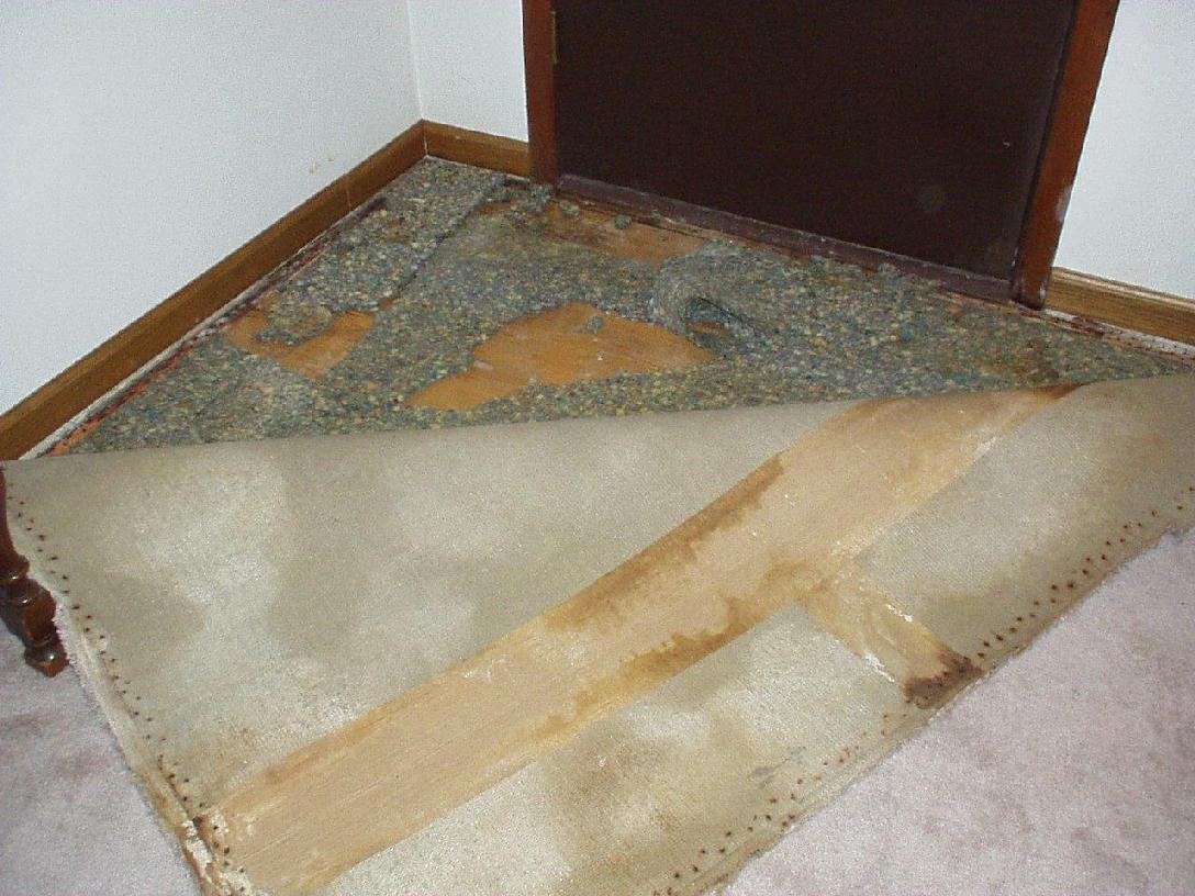 carpet case study 3