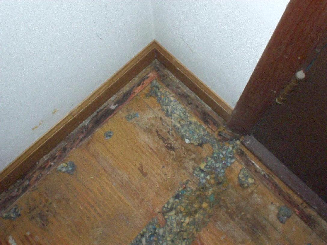 carpet case study 4