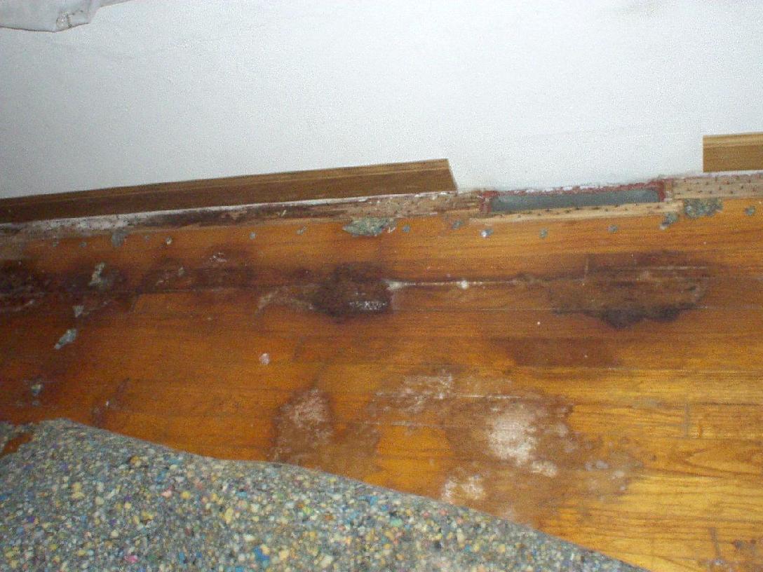 carpet odorxit case study