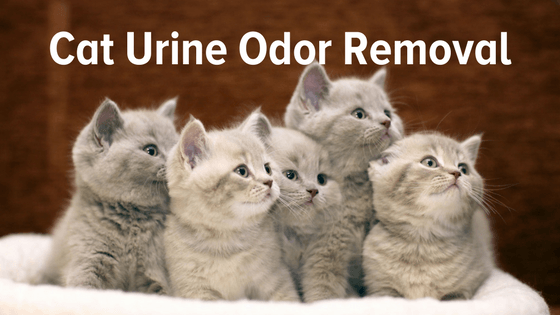 Best Way To Remove Cat Urine From Clothes