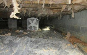 remove musty smell in crawl spaces