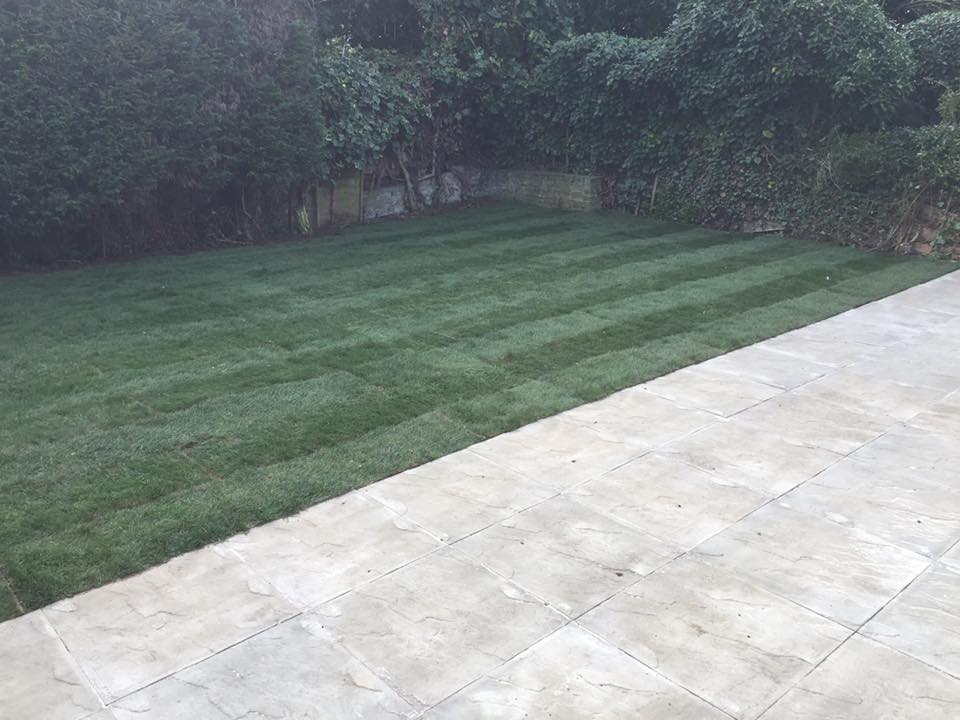 lawn beside paving