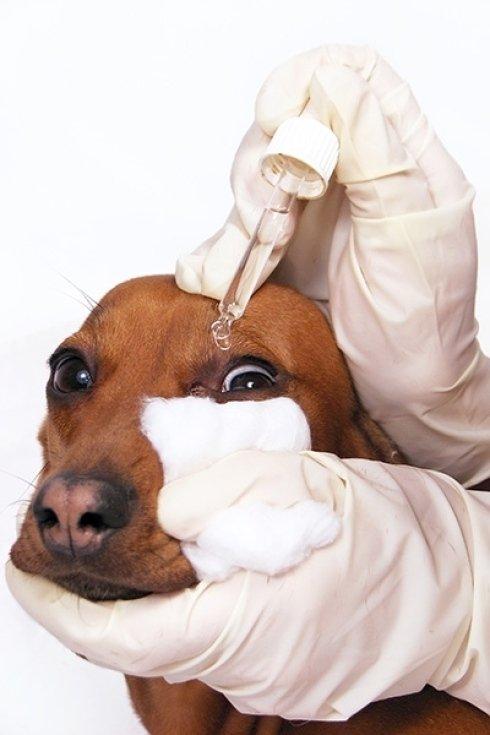 cure oculistiche per animali