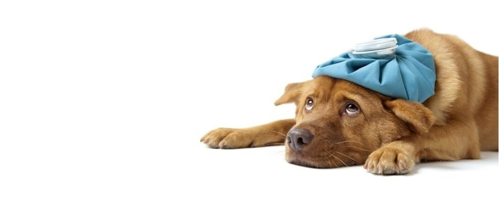 cura malattie canine