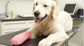 chirurgia ortopedica del cane