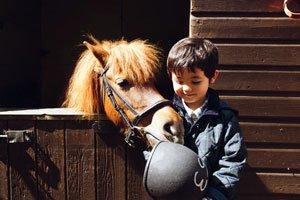 little boy feeding a horse
