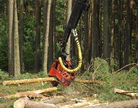 Emergency Tree Removal Jamestown, NY
