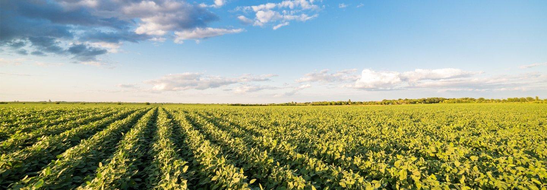 un campo in campagna