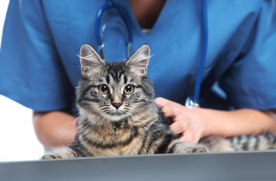 cat with veterinarian