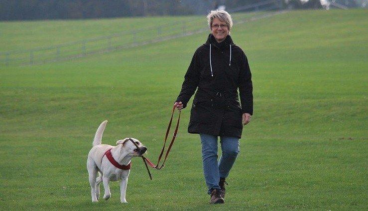 Dog Walker in La Crosse, WI