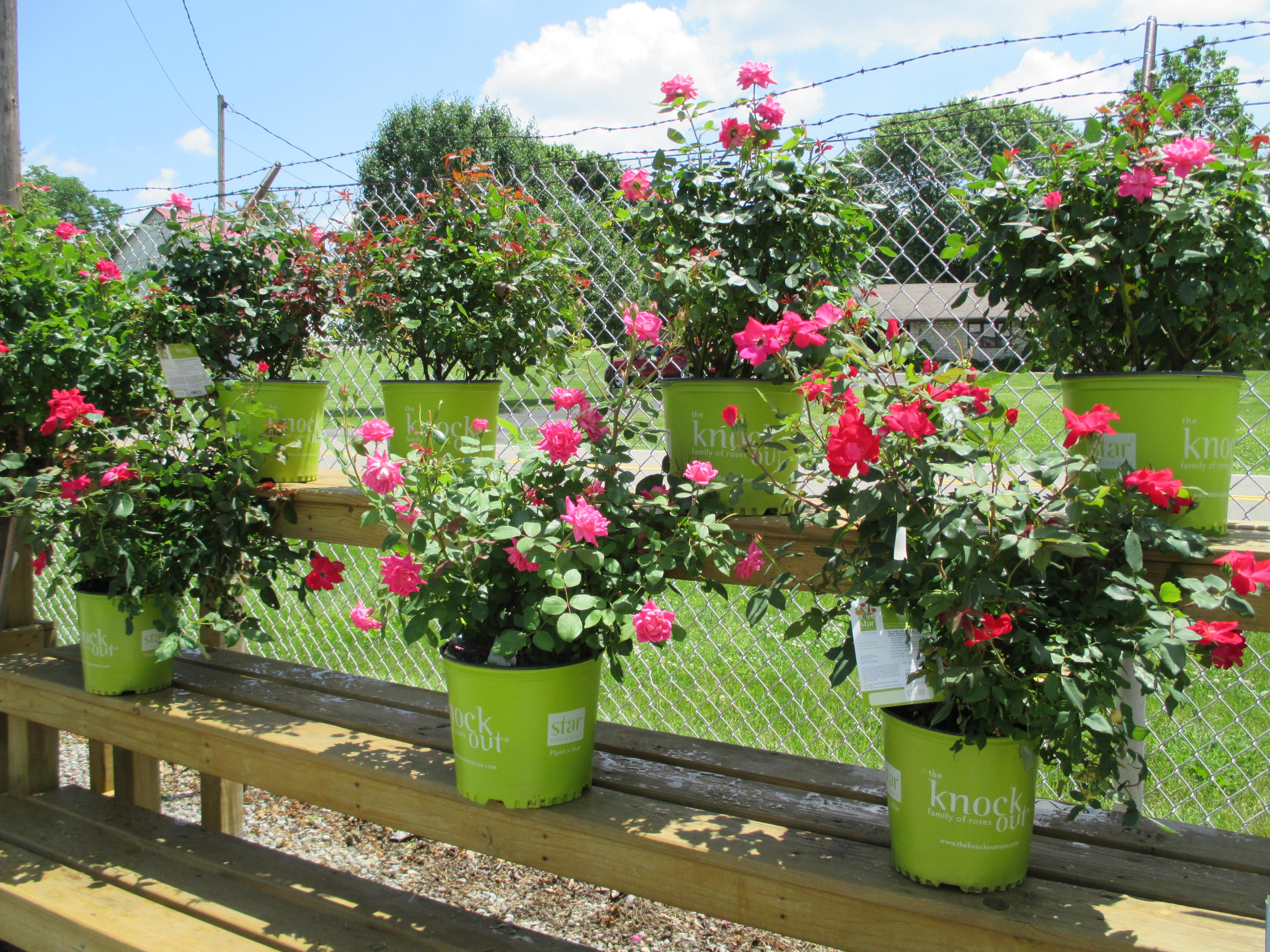wilson garden center inc landscaping tree service landscaping hamilton oh