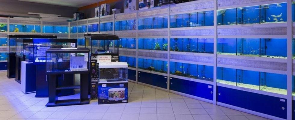 acquari e pesci Aosta