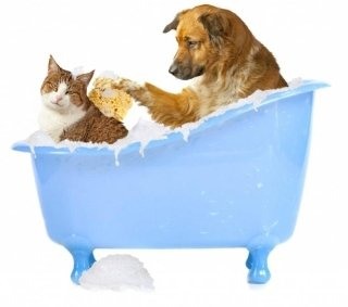 toelettatura cani e gatti