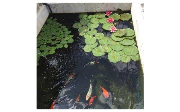 laghetti artificiali con pesci